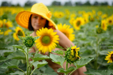 Photo session Nude in sunflowers. Photographer Pablo Incognito